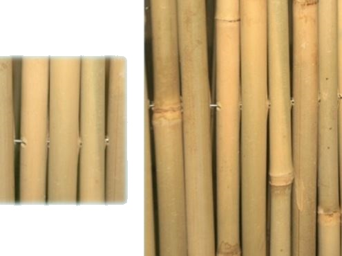 Arelle Master Bamboo