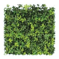 Siepe Squaregreen olive