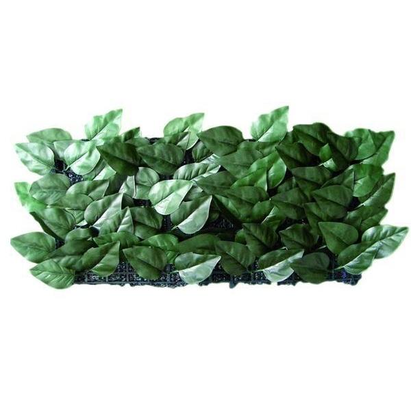 Siepe ombreggiante sempreverde blinky edera mt 1 5 x 20 for Edera sempreverde